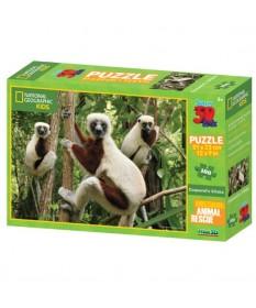 puzzle3d-nationalgeograpich-lemure