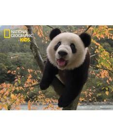 puzzle3d-nationalgrograpich-panda